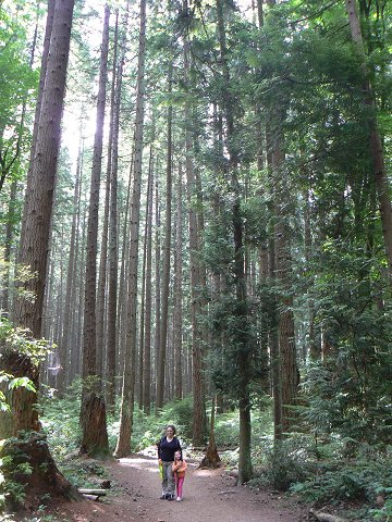 יערות וונקובר הקסומים